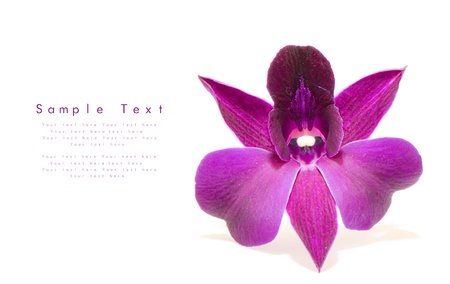 purple orchid: Orchid flower isolated on white background