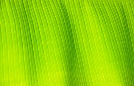 feuille de banane verte floral fond naturelles Banque d'images