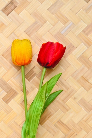 Tulips on bamboo background Stock Photo - 11448520