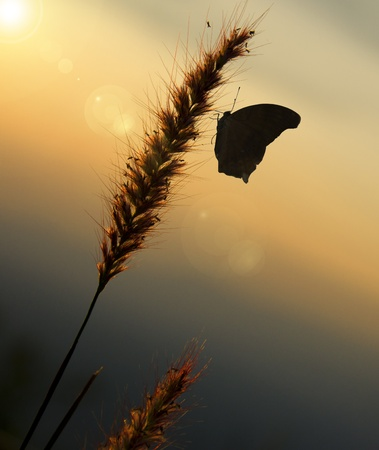 Butterfly in the evening  photo
