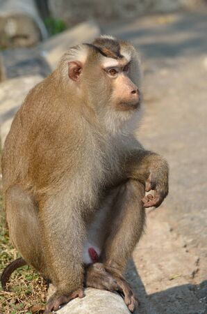 Monkey in khao yai national park.  Stock Photo - 12649200