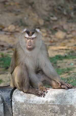 yai: Monkey in Khao Yai National Park.