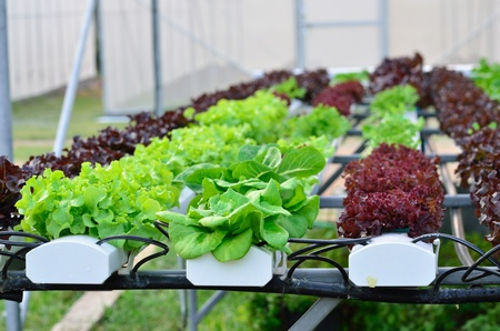 les légumes de culture hydroponique la ferme