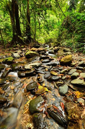 Peaceful mountain stream at Sri Phang Nga National Park in Southern Thailand   photo