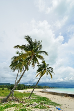 tropical beach with palm, Andaman Sea, Thailand  photo