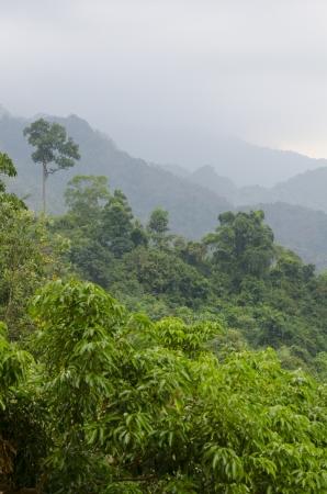 kaeng: morning fog in dense tropical rainforest, kaeng krachan, thailand