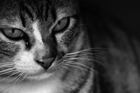 Cat Stock Photo - 17184565