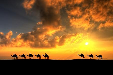 sunup: Camel Caravan In Desert
