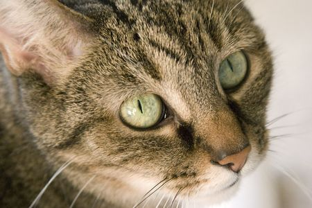 Tabby with startling green eyes