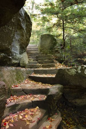 A leaf-covered stairway in the forest photo