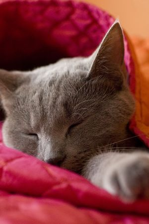 bedspread: A cat sleeping in a pink and orange blanket cocoon Stock Photo