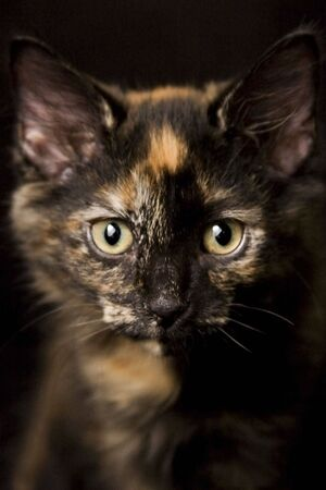 imploring: An adorable cat that is just asking to be taken home