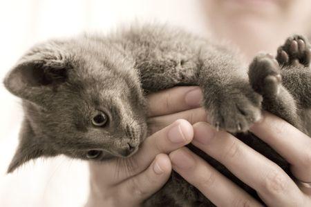 Kitten struggling to get down