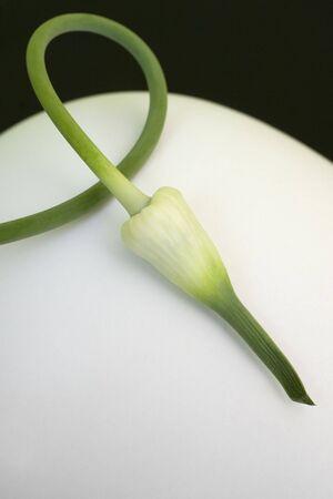 A lone garlic scape bud.