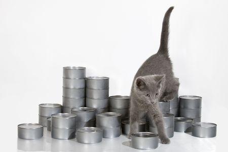 Gray kitten climbing through stacks of tuna photo