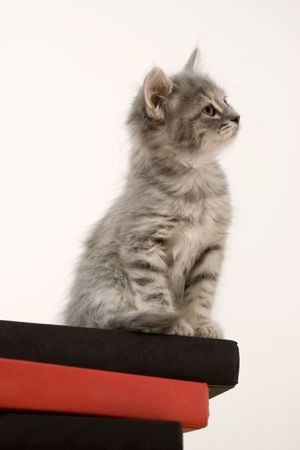 head tilted: A cat standing at attention on a stack of books with head tilted Stock Photo