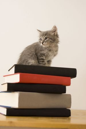 book spines: A kitten standing on a stack of books
