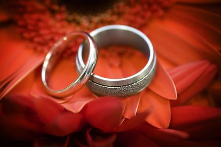 A set of wedding bands resting atop a red gerbera daisy
