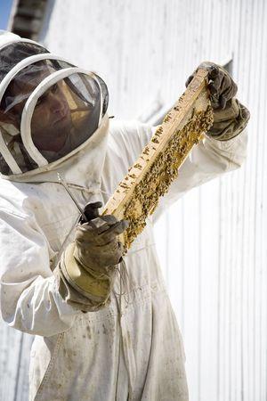 A beekeeeper performing hive maintenance