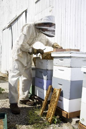 Beekeeper lifting the lid off of moveable wooden frames