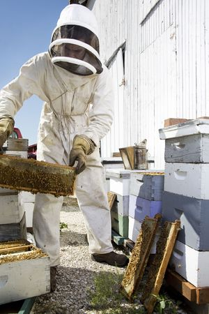 A beekeeper managing moveable hives Stock Photo