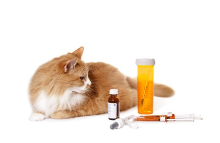 Cat Looking at Medication Reklamní fotografie