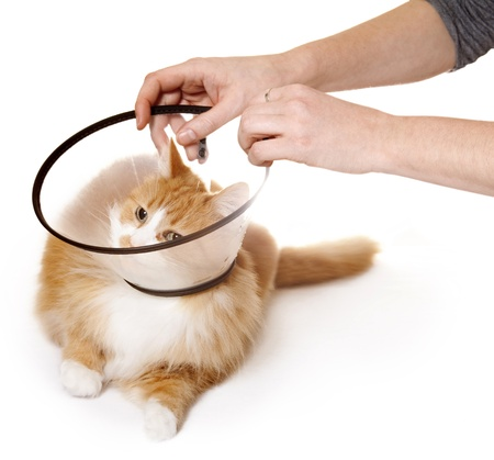 Cat with Cone Stock Photo