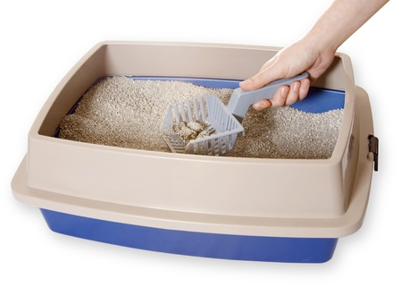 feces: Cleaning Out Litterbox