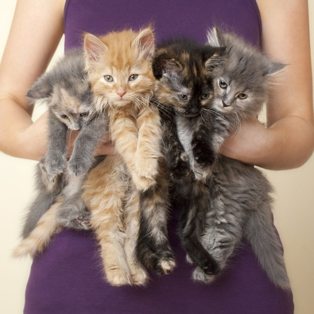 Four Kittens being held by woman Stock Photo