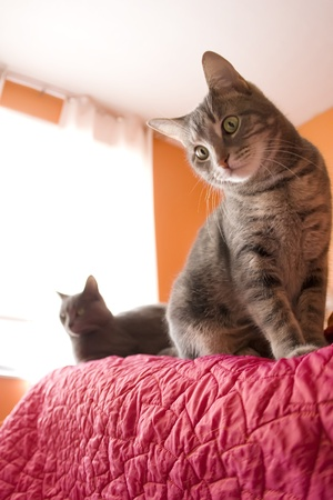 bedspread: Two Cats Hanging Out