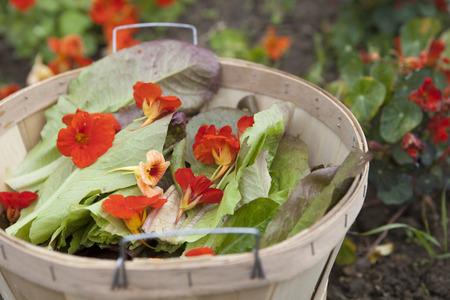 edible: Edible Flower Salad Ingredients Stock Photo