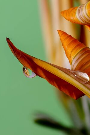 water drops on the petals and leaves of the colorful flowers macro large closeup Imagens