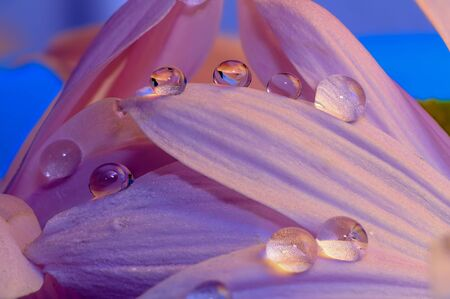 water drops on the petals and leaves of the colorful flowers macro large closeup