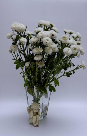 A bouquet of white flowers of Margaret's yawn proper in a nice frame Zdjęcie Seryjne