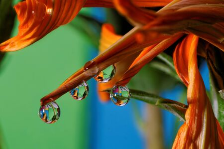 macro water drops on petals and flower leaves