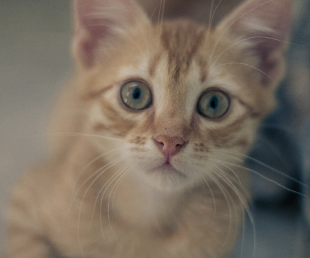 pete: Curious Cat