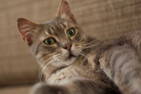 pete: Green Eyes Cat