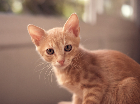 pete: tabby cat