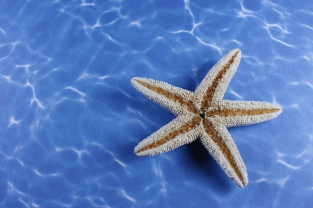 Star fish flipped on its back on water background Stock Photo - 8749296