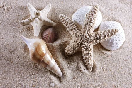 Group of shells on a background of sand Stock Photo - 8749309