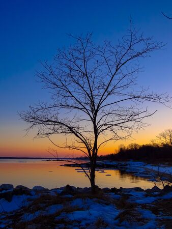 lone  tree: Lone Tree at Sunset on the Chesapeake Bay in Winter