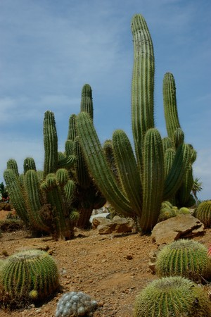 diversity of the region: Bid and small various cactuses against a blue sky background