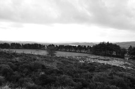 bracken: moorland heather bracken rainy british
