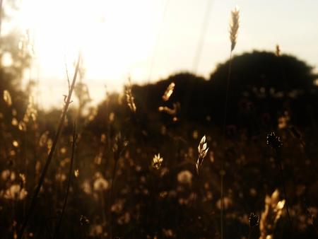 wildflower meadow bokeh