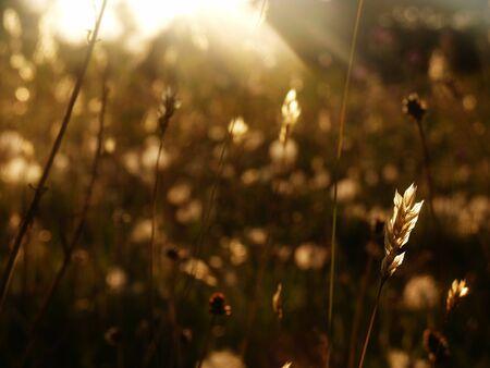 Wildflower: wildflower meadow grasses sunlight