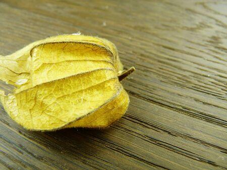 physalis yellow on wooden background Banco de Imagens