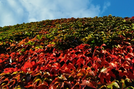 red leaves and dark green leaves