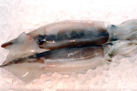 calamar: Squid
