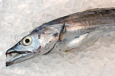 scabbard: Scabbard fish