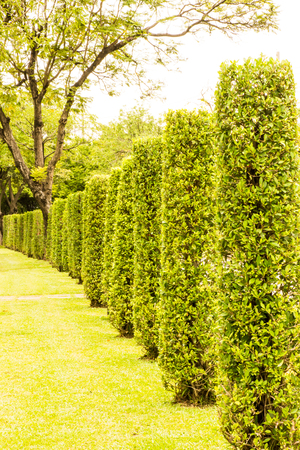 Retaining wall  in garden  Stock Photo